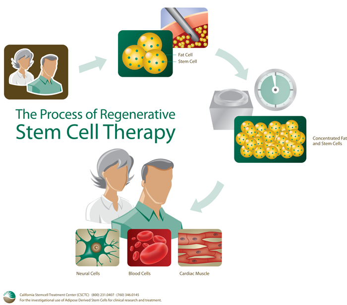Stem Cell Research Current Studies in Cleveland